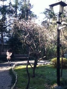 靖国神社 $日本神話とタロット / 魂の声を聴く優雅な時間